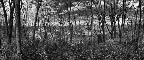 Free stock photo of black and white, clouds, forest, trees
