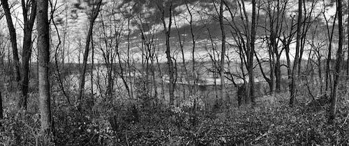 Photos gratuites de arbres, forêt, noir et blanc, nuages
