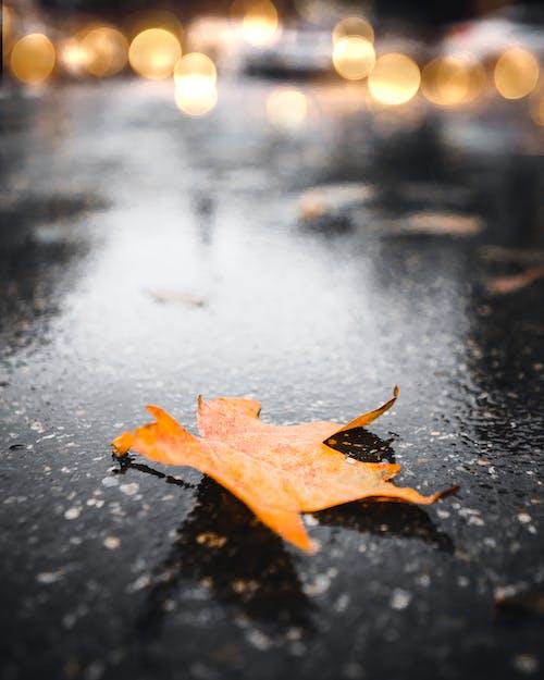 Free stock photo of autumn, autumn city, autumn color
