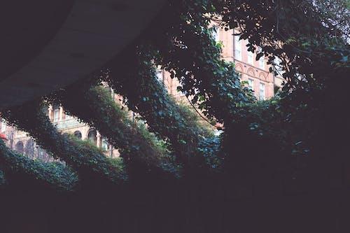 Fotobanka sbezplatnými fotkami na tému rastliny, tmavý, viniče