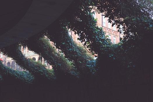Free stock photo of dark, leaves, plants, vines