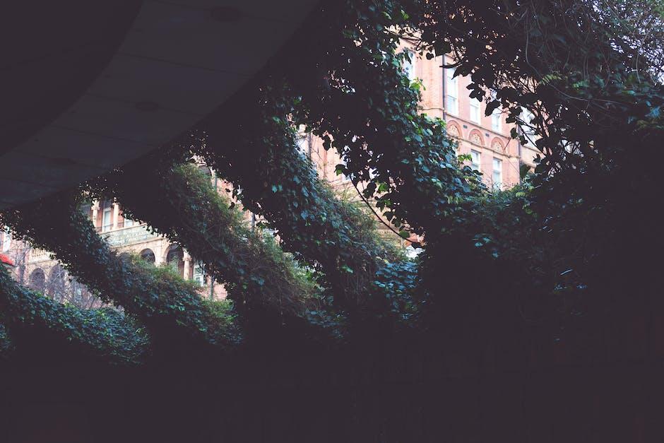 New free stock photo of dark, leaves, plants