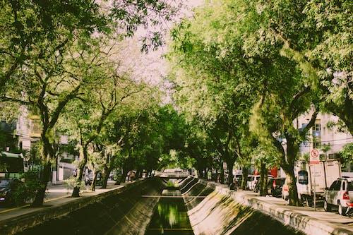 Kostenloses Stock Foto zu architektur, bäume, beratung, brücke