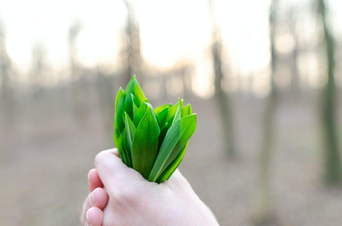 bylinka, bylinný, čerstvý