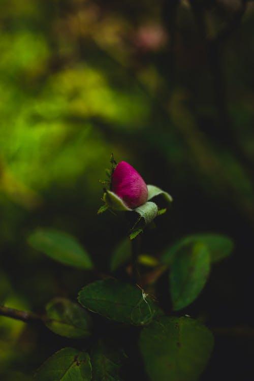 Ingyenes stockfotó a természet szépsége, bimbó, elmosódott háttér, környezet témában