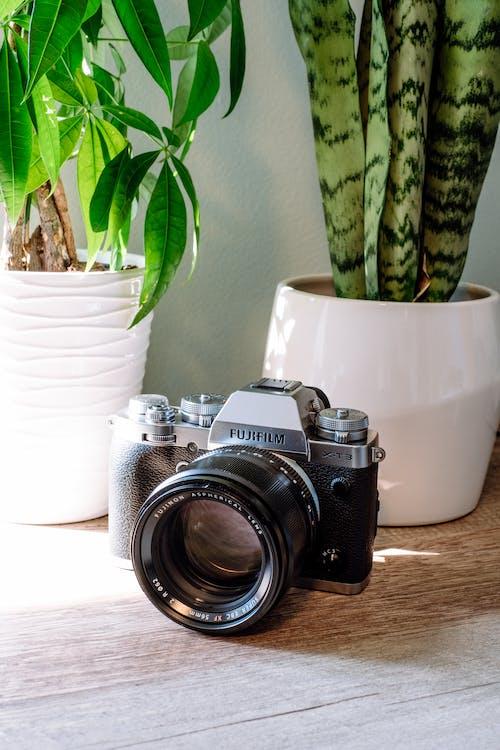 Gratis lagerfoto af antik, årgang, blade, Fujifilm
