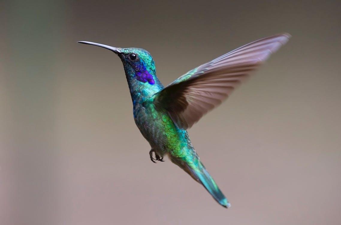 Immagine gratuita di ali, animale, becco