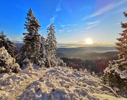 Free stock photo of blue sky, christmas tree, mountains