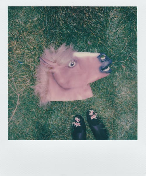 Brown Horse Mask on Green Grass