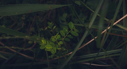 Ingyenes stockfotó hátsó udvar, környezet, közel, Részlet témában