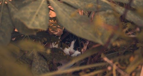 Free stock photo of backyard, brighteyes, cat, cat's eyes