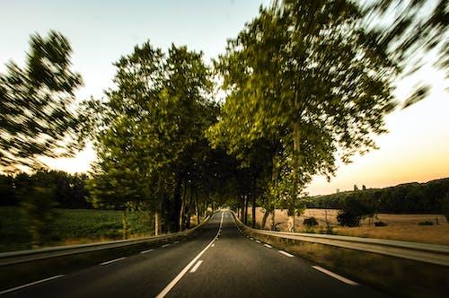Foto d'estoc gratuïta de carrer, carretera, conducció, moviment