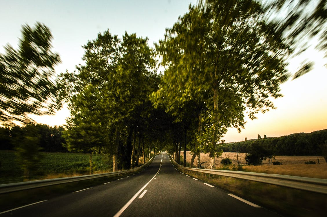 Selective Focus Photography of Road and Trees