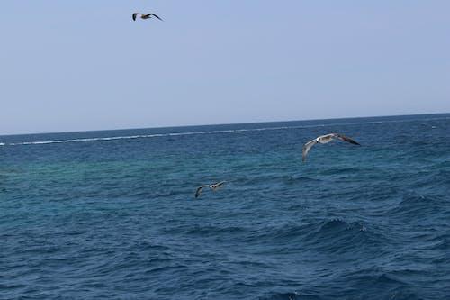 Photos gratuites de mer, mouettes, oiseaux