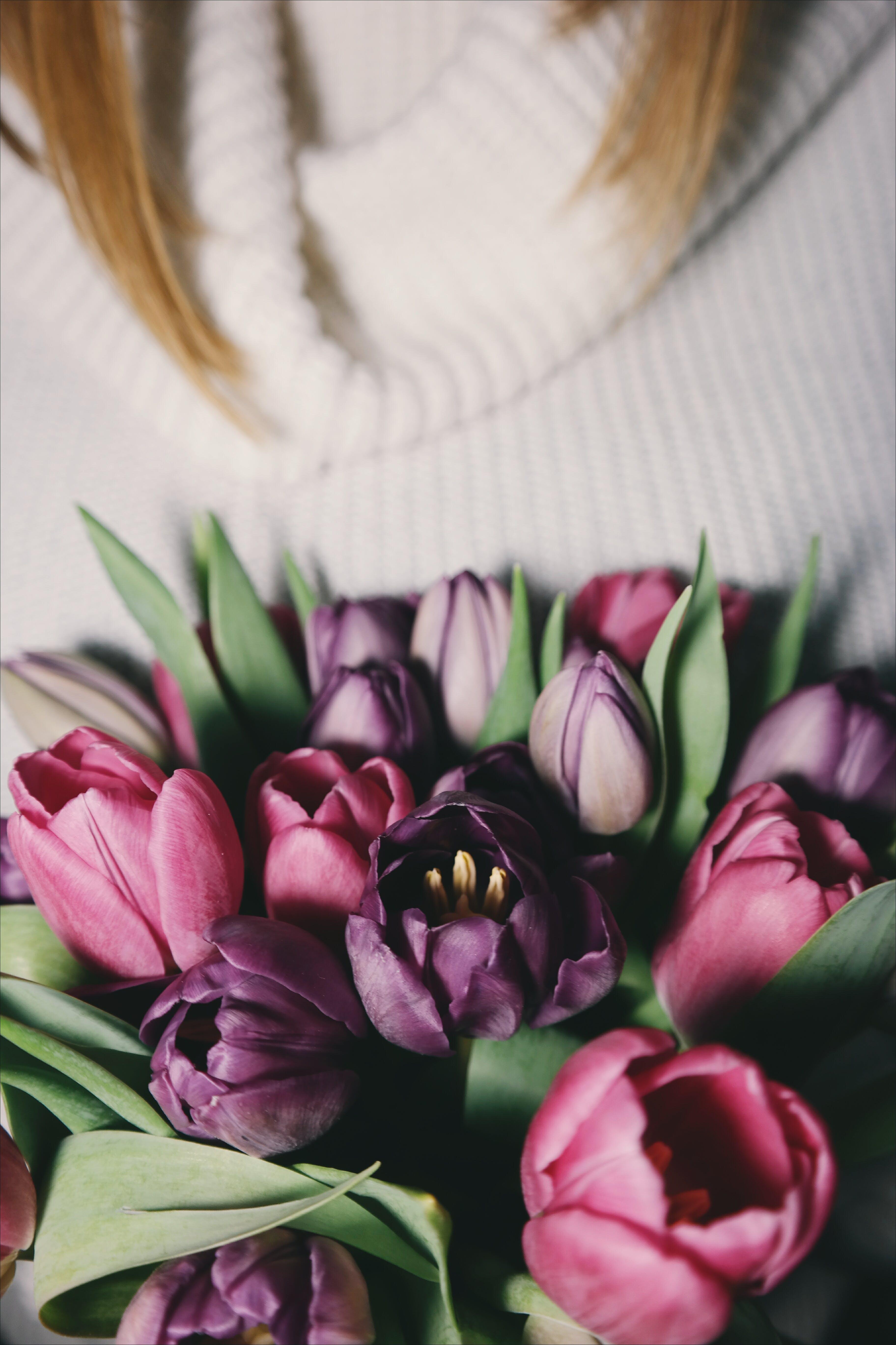 Kostenloses Stock Foto zu blühen, blumen, blumenstrauß, blütenblätter