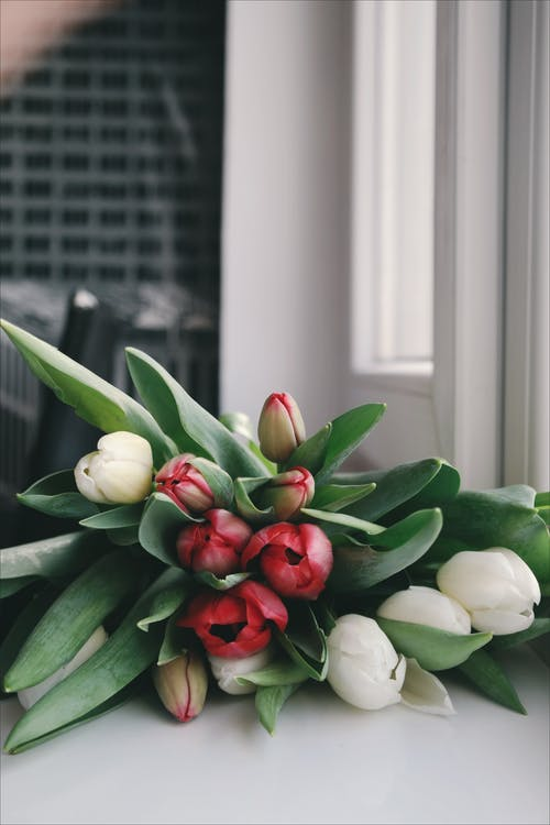 Bouquet of Red and White Tulip Flowers