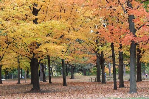 도시 공원, 자연, 조화, 캐나다의 무료 스톡 사진