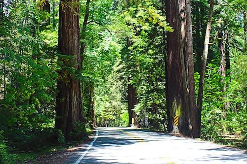 국립공원, 나무, 녹지, 미국의 무료 스톡 사진