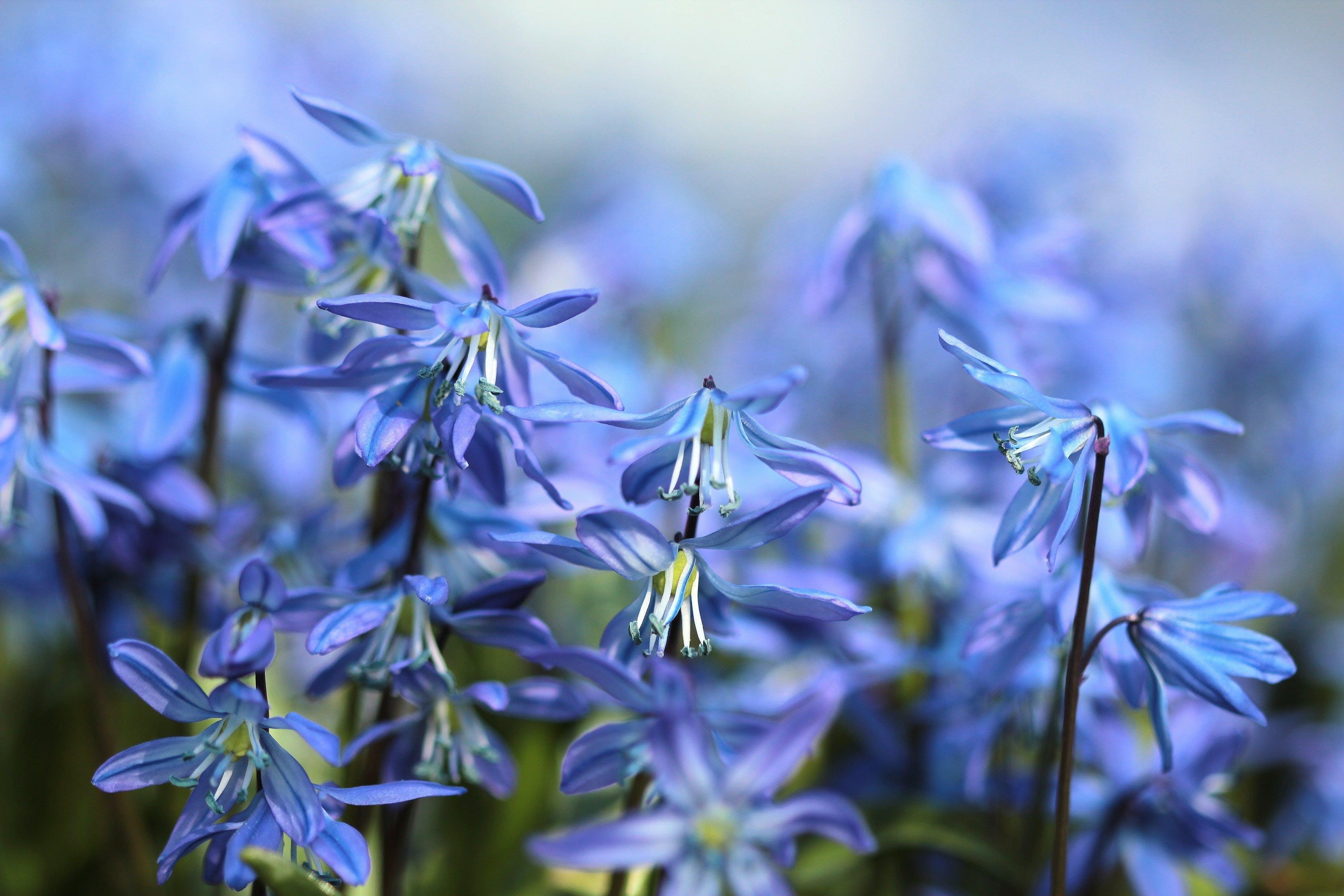 bloom, blurry, close-up