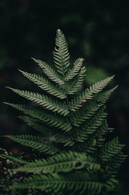 Gratis stockfoto met bladeren, blurry achtergrond, botanisch, close-up