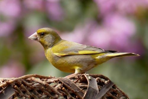 Yellow Bird Standing on Nest