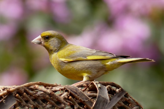 Free stock photo of bird, garden, blur, close up