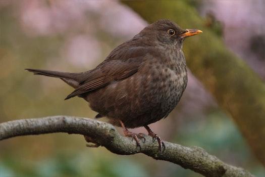 Free stock photo of bird, animal, beak