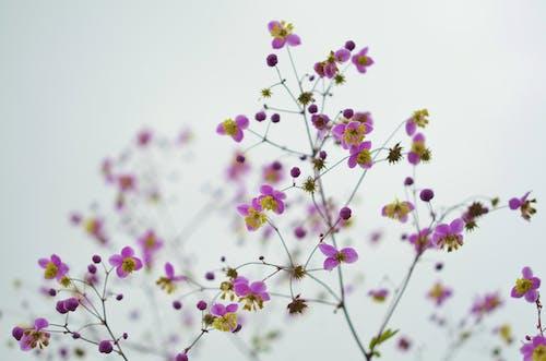 Gratis lagerfoto af blomst, blomstermotiv, HD-baggrund, kronblad