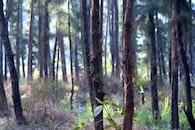 wood, trees, india