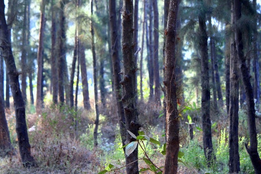 Free stock photo of wood, trees, india, jungle
