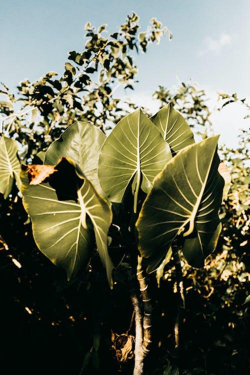 Fotobanka sbezplatnými fotkami na tému Brazília, čerstvosť, čerstvý, deň