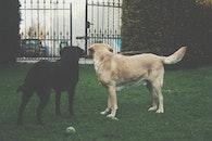 garden, animal, pet