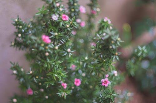 Foto d'estoc gratuïta de flor bonica, flors boniques, flors violetes, verd