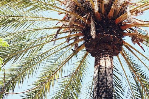 Immagine gratuita di palma