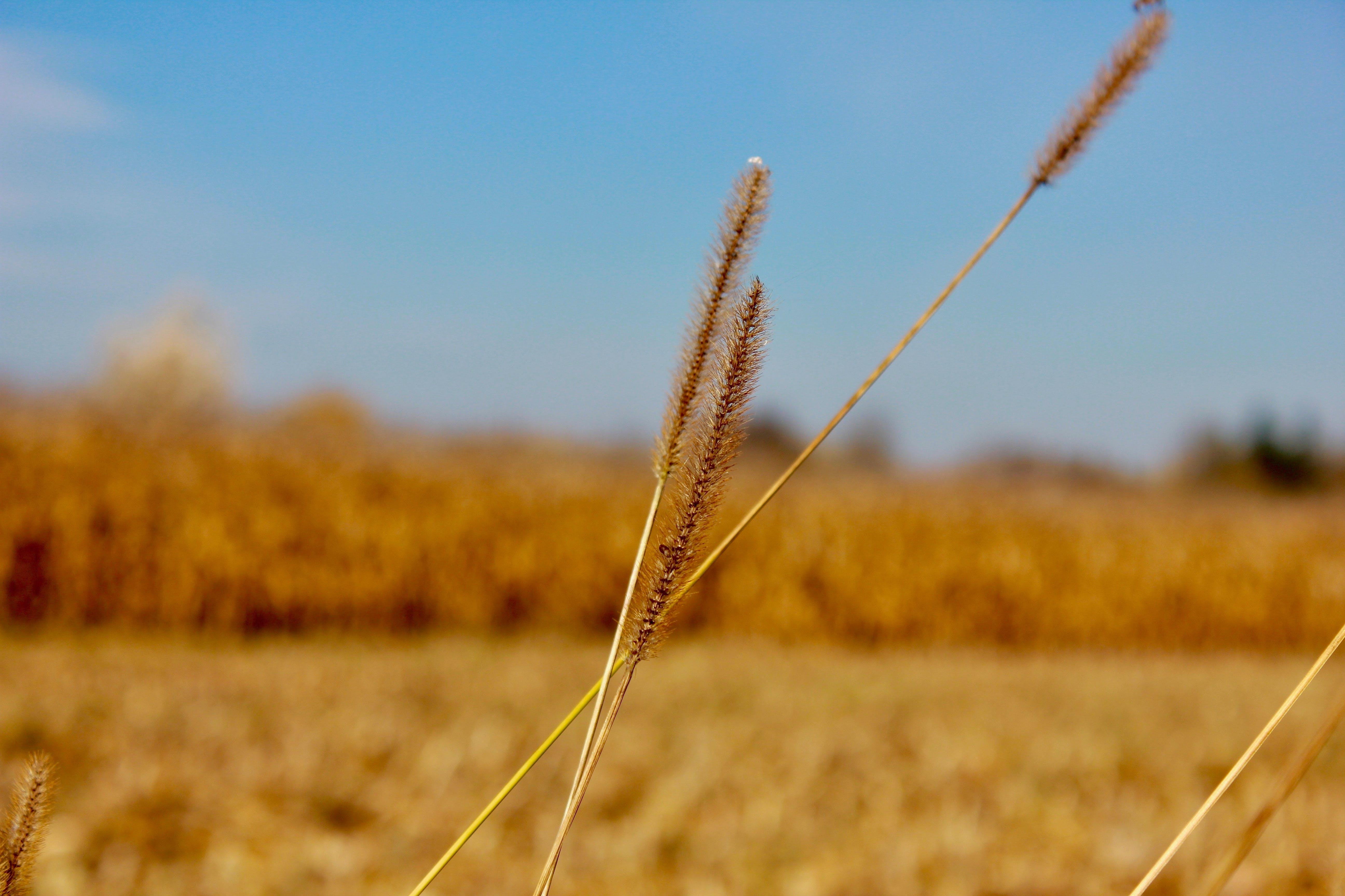 Free stock photo of crop, macro, macro photo, macro photography