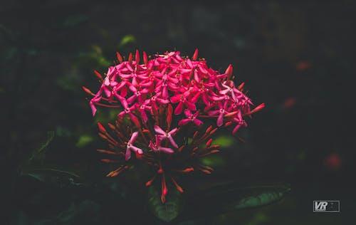 Free stock photo of flower, flowerphotography, flowers