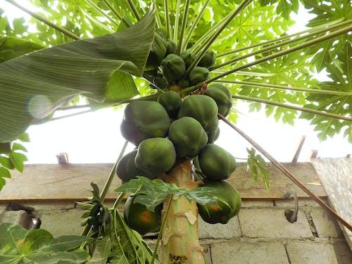Foto profissional grátis de mamão, papaya, papaye
