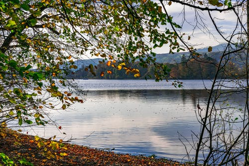 Free stock photo of autumn trees, beauty in nature, lake, light reflections