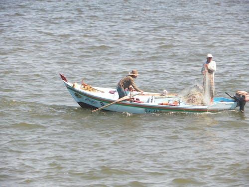 Gratis lagerfoto af fange fisk