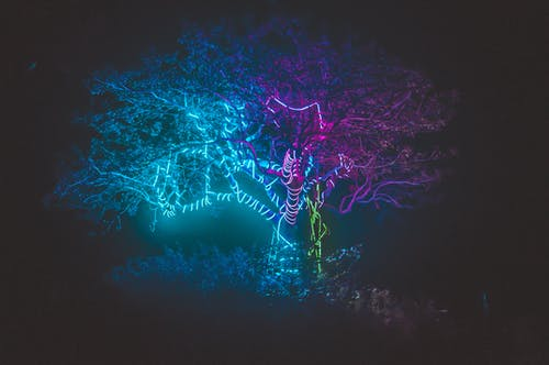 Free stock photo of bright lights, electric lights, tree, tree of life