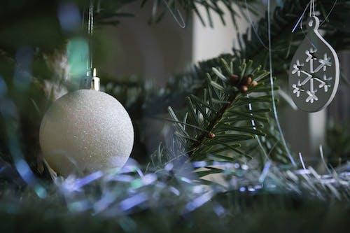 ağaç, Noel, Noel ağacı, Noel dekorasyonu içeren Ücretsiz stok fotoğraf