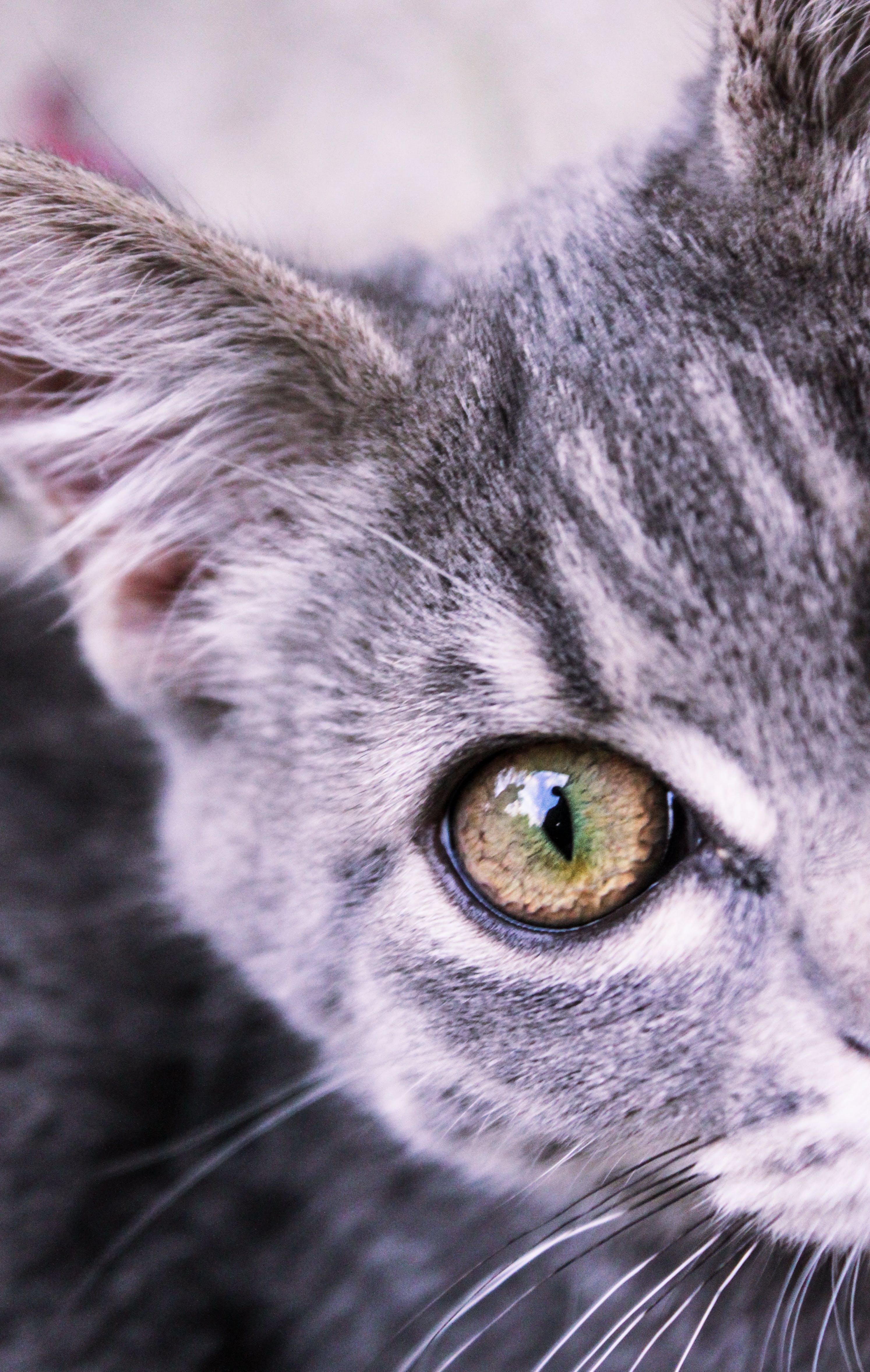 Free stock photo of animal, cat, cats, closeup