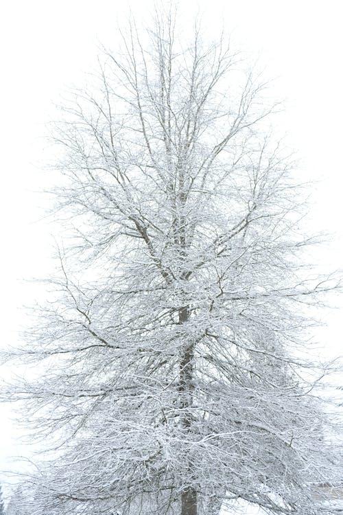 Fotos de stock gratuitas de blanca navidad