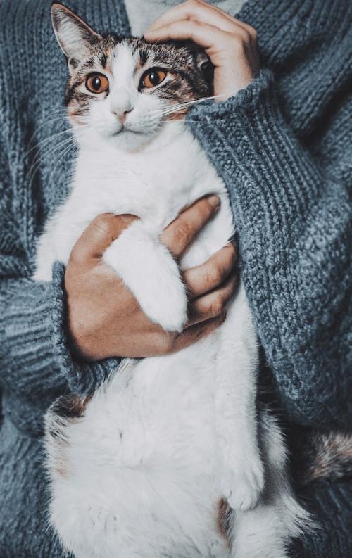 가정의, 감기, 고양이, 고양잇과 동물의 무료 스톡 사진