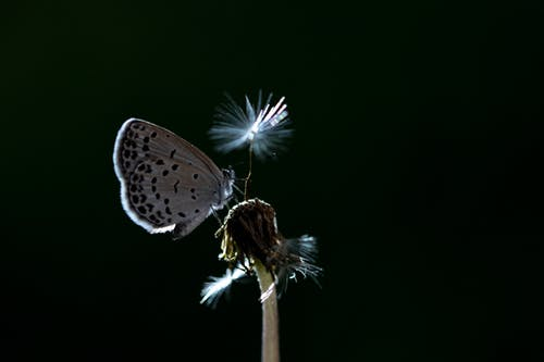 Butterfly Perched on Flower Photography