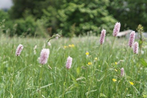 Ảnh lưu trữ miễn phí về Bo mạch, cánh đồng, chụp ảnh thiên nhiên, cỏ