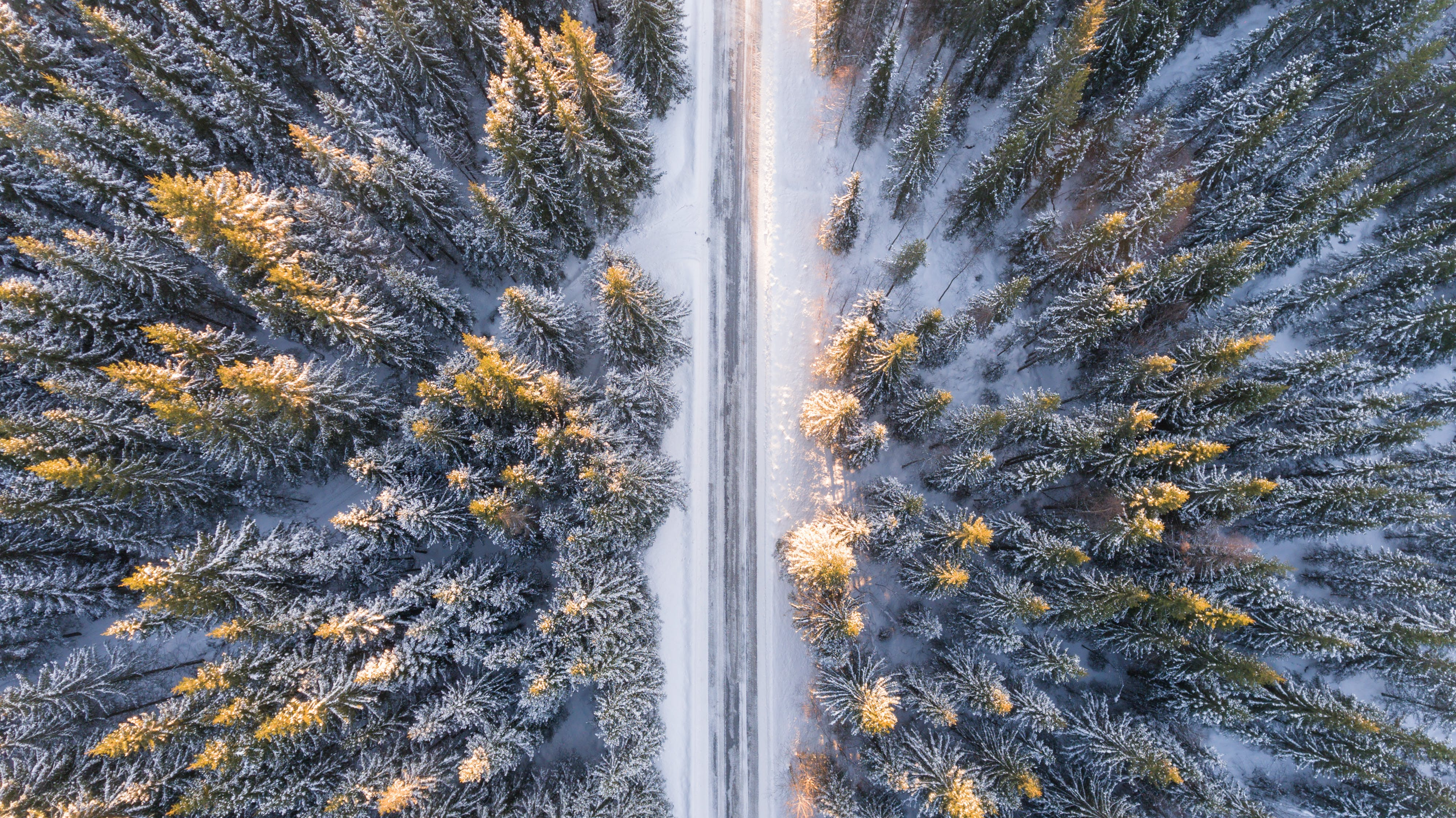Aerial Photography of Road in Forest