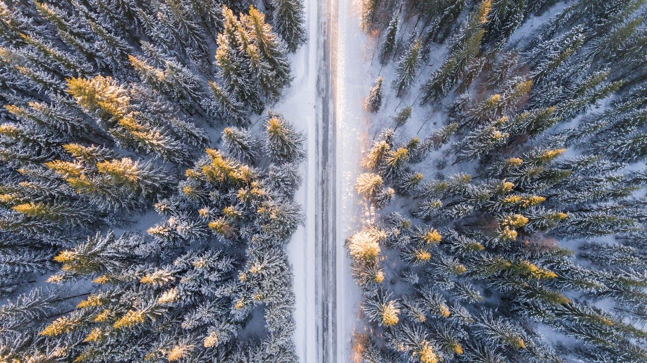Photographie Aérienne De La Route En Forêt