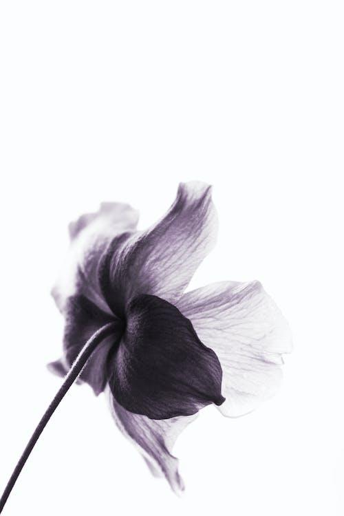 Foto profissional grátis de broto, caule, delicado, flor
