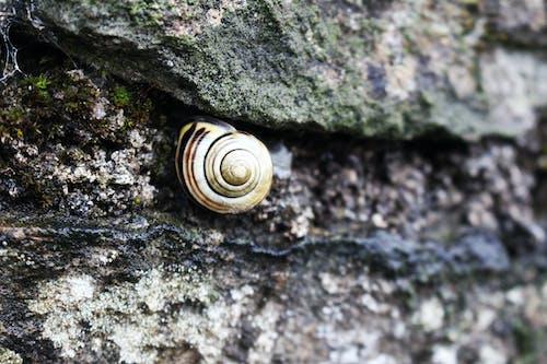 Foto stok gratis alam, batu, di, kecil